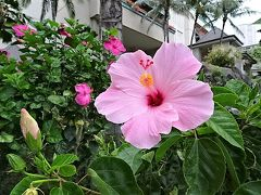 2017年4月Hawaii <グランドアイランダーbyHGV滞在記> 【後半】