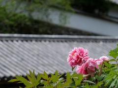 傘寿を越えて 奈良旅を -2 牡丹の咲く 長谷寺へ