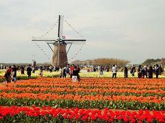 60万本の花々が咲き誇る佐倉チューリップフェスタ