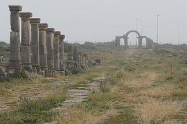 モロッコ最終日。フェズを早朝に出て世界遺産のローマ遺跡、ボルビリス(Volubilis)を歩く