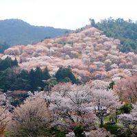 世界遺産・吉野山の千本桜を満喫!やっぱり春は花見だ。