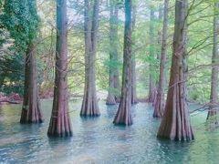 ジブリの森を訪ねる散歩旅 in 篠栗九大の森&南蔵院