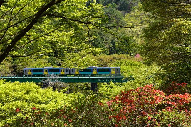 矢祭町(やまつりまち)は福島県の最南端に位置し 、南は茨城県常陸太田市大子町、北は福島県塙町に接しています。<br /><br />水郡線(すいぐんせん)の矢祭山駅は、全区間(水戸~郡山)のほぼ中間地点にあり、矢祭山と桧山に挟まれた久慈川の峡谷沿いにあります。<br />4月上旬には3,000本の桜、5月には5万本以上ものツツジが満開となり、秋には紅葉が色づき、美しい彩りの風光明媚なところです。<br /><br />矢祭の町名は、源義家が奥州十二年戦争で勝利を収めて凱旋する途中、通りがかったこの地の美しさに魅了され、背負っていた弓矢を岩窟に納めて武運長久を祈ったことに由来しています。<br /><br />今回の旅は、大型連休の合間を利用し、水戸から水郡線に乗り、色づいてきた山の新緑と矢祭山のヤマツツジ・トウゴクミツバツツジの花を楽しみます。<br />