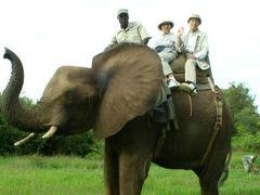 南アフリカへ?何しに?(2)アフリカ象に乗ったり、ビクトリアの滝にびっくりしたり.…