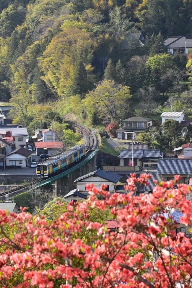 東白川郡塙町(はなわまち)は福島県南部に位置し、江戸時代に幕府の直轄地と街道の宿場として発展してきたところです。<br /><br />塙町のつつじは、風呂山(ふろやま)公園の斜面に約4000本のヤマツツジが咲き、水郡線の車窓からも赤く染まる山肌が眺められます。<br />町の中を歩くと、大正、昭和初期に建てられたと思われる建物を見ることができます。<br /><br />旅行記は、塙町と観光協会の資料を参考にしました。<br />