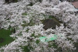 2017春、新潟・福島の名城巡り(13/27):4月20日(4):会津若松城(4/7):城内展示品、天守からの眺望、見頃の染井吉野