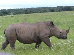 アフリカへ?  何しに? (7) 続・クルーガー国立公園プライべートサファリ満喫