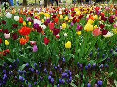 観光バスで巡る 2大花の名所 #2 - 国営ひたち海浜公園 満開のチューリップ