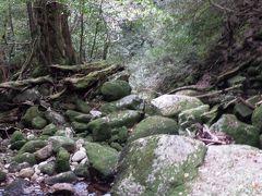 きつかった~。屋久島の縄文杉への道のりはへたばりました。2泊3日の旅①