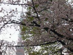 増上寺で鐘と桜見 登り龍もね!