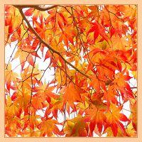 Solitary Journey [1833] 秋色に彩られた西中国山地は赤色や黄色で染まった紅葉でいっぱいでした!<もみの木森林公園> 広島県廿日市市