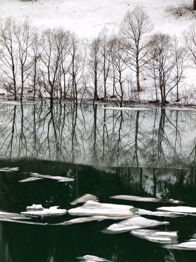 新潟県内の桜の季節も終わり新緑シーズンに入る季節なのですが、地元の新聞やテレビで「雪流れ」(   http://www.iine-uonuma.jp/2017/04/6269  )のニュースが報道され、出かけてきました。夏の登山シーズンには訪ねてはいたのですが大白川にある破間川(あぶるまがわ)ダムで今だけの光景に感動しました。(まだ雪も多く冬の気温で寒かったのですが)<br /> 数日後、三条市下田地区にある「越後長野温泉」( http://www.rankei.com/  )そして、南魚沼市の上の原、お松の池( http://www.niigata-kankou.or.jp/sys/data?page-id=6113  )、五泉市のチューリップ( https://www.niigata-kankou.or.jp/sys/data?page-id=1903  )、そして長岡市の「越後丘陵公園」(  http://echigo-park.jp/guide/flower/tulip/index.html )のチューリップ祭りにも出かけてきました。(小国町シラネアオイ http://www.naviu.net/siraneaoi_oguni/siraneaoi_oguni.html )<br /> 雪国の春大いに楽しめました。