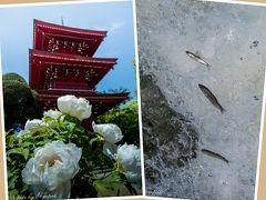 那珂川の瀬に稚鮎が踊り、鄙の花の寺に牡丹が咲き誇る