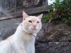 母と行く、初夏の広島2泊3日の旅② ~尾道は猫天国だった~