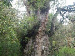 きつかった~。屋久島の縄文杉への道のりはへたばりました。2泊3日の旅②
