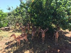 ちょこっと南部アフリカ いいとこ取りの旅6 チョベ国立公園 ゲームドライブ編