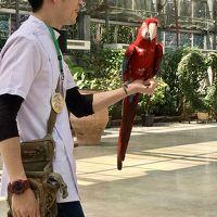 そんなに鳥が好きでなくっも楽しめる 行ってよかった!掛川花鳥園