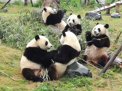 臥龍中華大熊猫苑(2017.06. 01)(熊猫楽園にも寄り道)