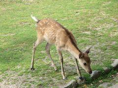 こあひるさん、ようこそ奈良へお帰りなさい☆奈良国立博物館「快慶」&カフェ葉風泰夢(ハーフタイム)~人の多さに鹿もびっくり?!\(◎o◎)/!