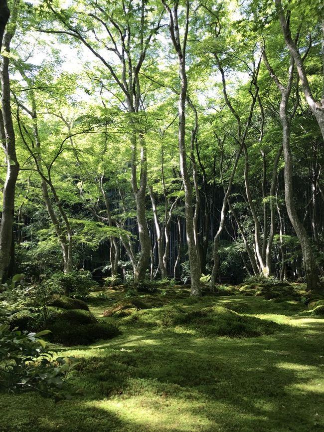 新緑が美しい京都で青もみじを愛でる旅に行ってきました。お天気に恵まれましたが、日差しが強くて熱中症一歩手前。でも苔ともみじが美しかった祇王寺では心洗われる風景に出合いました