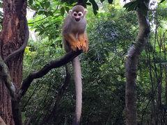 2015年8月【No.1】シンガポール3泊4日の旅☆1・2日目~初日はMy Birthday♪ リバーサファリ&シンガポール動物園 Pan Pacific Singaporeに滞在