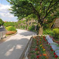 春の烏山川緑道、お散歩記
