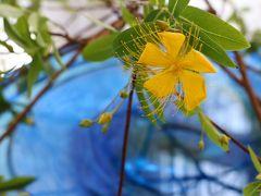 花と器のハーモニー2017、山手西洋館・・・