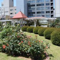 バラが見ごろ本郷給水所公苑とその周辺を歩く。