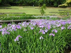 大阪万博記念公園・日本庭園「花しょうぶ田」をホロホロ散歩。(2017)