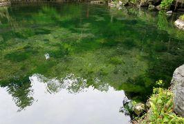 2017春、長野、群馬と栃木の名所巡り(24/26):4月27日(6):出流原湧水池、ここもモネの池?、磯山弁財天、カラーの白い花