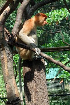 2007年10月①コタキナバル3泊5日の旅☆1・2日目~ロッカウイ動物園&市内観光 シャングリラタンジュンアルに滞在