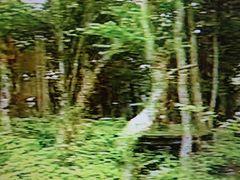 1988年(昭和63年)6月神奈川(玄倉 山神峠 桧岳(1166m) 寄) 5月神奈川(大群山(1587m) 加入道山(1418m))