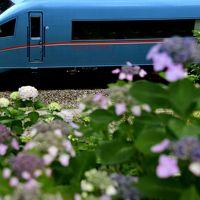 山北の紫陽花を見に訪れてみた(まだ全然早すぎた編)