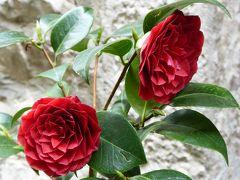 春の優雅なアブルッツォ州/モリーゼ州 古城と美しき村巡りの旅♪ Vol315(第11日) ☆Oratino:美しき村「オラティーノ」旧市街の園芸鉢やセンスの良さが光る♪