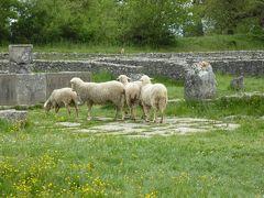 春の優雅なアブルッツォ州/モリーゼ州 古城と美しき村巡りの旅♪ Vol332(第12日) ☆Saepinum:古代ローマ遺跡の村「サエピヌム」フォロ(居住跡)と羊の群れを眺めて♪