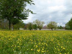 春の優雅なアブルッツォ州/モリーゼ州 古城と美しき村巡りの旅♪ Vol336(第12日) ☆Saepinum:古代ローマ遺跡の村「サエピヌム」テアトロ(劇場跡)から春のお花畑を歩く♪