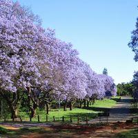 南部アフリカのジャカランタ、乾季のヴィクトリアフォールズなどの観光を満喫  南部アフリカ4ヶ国の旅
