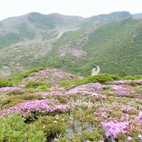 久住山系のミヤマキリシマはどの山でも素晴らしい!