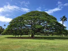 ハワイ初上陸なのにマウイ島へ!Vol.2 JALビジネス&この木なんの木