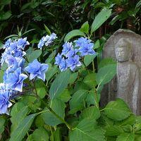 アジサイの季節の鎌倉・男の一人旅