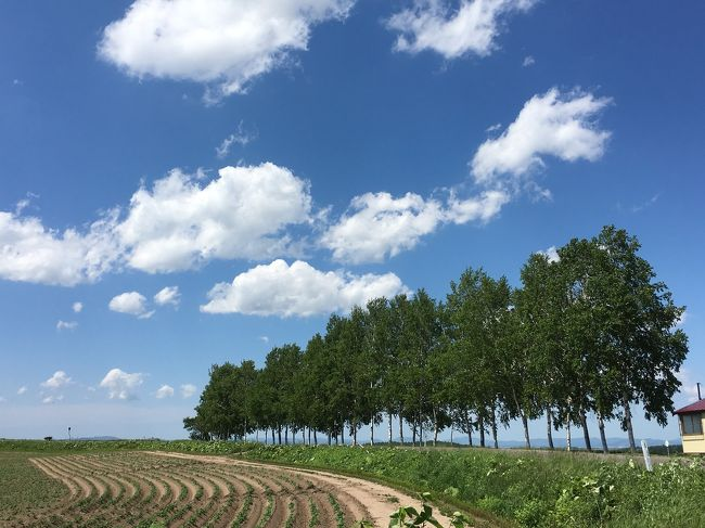 旭山動物園を後に真っ青な空とプカプカ浮かぶ真っ白な雲の下、雄大な美瑛の丘を見たくて食事も摂らずに向かったセブンスターの木の手前の白樺並木~感動