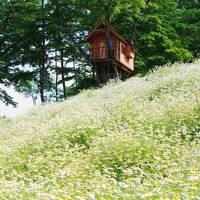 花*花*花の長野旅(2)~カモミールの白い絨毯が見たくて@カミツレの里
