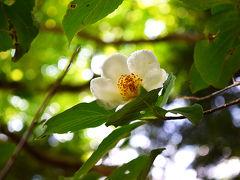 紫陽花の三千院と沙羅双樹の寂光院
