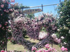 無料開放の薔薇園へリベンジに
