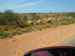 西オーストラリア パースからエクスマスまでレンタカードライブ。。。その7「カナーボンへ」