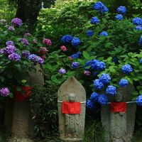 奈良 紫陽花めぐり〜矢田寺、般若寺