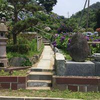 アジサイが綺麗と聞いて早速行って見ました 「いこいの里園」  ☆鹿児島県鹿屋市