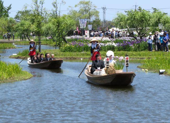 2017年4月水郷佐原水生植物園が「水郷佐原あやめパーク」と名前を変えてリニューアルオープンしました。「ハス回廊」や「スイレン池」等を拡張再整備、子供が楽しめる「森の遊び場」と「ドックラン」の新設、サッパ舟での「園内舟めぐり」の10月までの運航延長など、一段と充実した施設となりました。また「水の郷さわら」や「佐原の街並み」の散策、「香取神宮」へのお詣りなどもお薦めです。<br /><br />2017年の「あやめ祭り」は、6/3(土)~6/25(日)の期間実施され、江戸・肥後・伊勢系など約400品種150万本のハナショウブが咲き乱れ、「嫁入り舟の運行」や「佐原囃子の演奏」など、様々なイベントが実施されています。この期間の開園時間は;8:00~18:00で、入園料は;大人800円(シルバー700円)・小中学生400円、駐車場は無料(乗用車500台・大型バス30台)です。<br /><br />訪れた6月17日(土)は、ちょっと風がありましたが快晴の天気、「嫁入り舟の運航」が10時30分からあります。「水郷佐原あやめパーク」に早めの8時30分に到着し、園内を散策、嫁入り舟の運航と結の島での結婚式を見学しました。午後「水の郷さわら」に移動し、道の駅と水の駅を見学、特産品直売所で野菜類とメスのワタリガニを購入、施設周辺を散策後帰宅の途につきました。<br /><br />