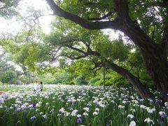 栃木県民の日、県民と分かる証明書見せたらあしかがフラワーパーク入園料が無料でした