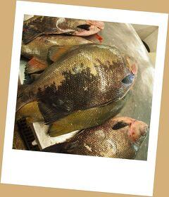 とうとう来ちまった...「地球の秘境:大アマゾン河(...のお魚づくし!・市場、メルカード)編」...2...(マナウス/ブラジル)